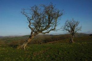 tree(1)
